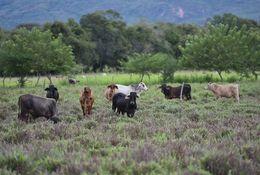 Bodenverteilung: steigende Ungleichheit in Kolumbien