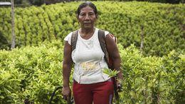Einblicke in die Realität der Kokabäuerinnen und wie ihr Einbezug in die Politikformulierung Verbesserungen bringen würde