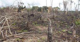Wegweisendes Urteil des Verfassungsgerichtes zum Schutz des Amazonaswaldes