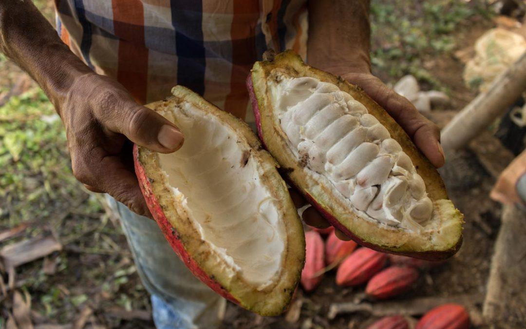 Kakao statt Koka – Resistenz im Cauca