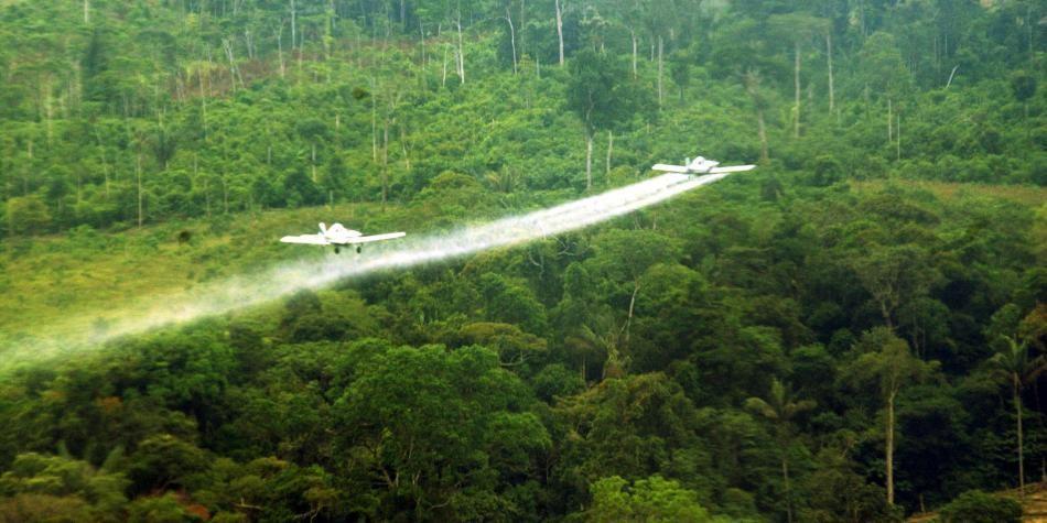 Streit um die richtige Strategie gegen die Kokapflanzungen: freiwillige Substitution oder Chemiekeule aus der Luft?