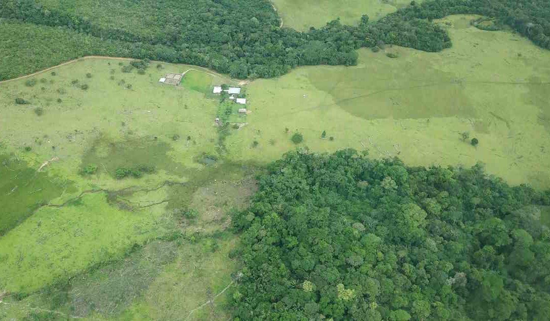 Vom Versuch, der Abholzung Einhalt zu gebieten
