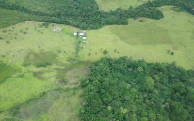 Fleischkonsum, Abholzung und (un)nachvollziehbare Zusammenhänge